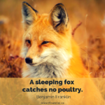 fox squinting in the middle of dry grass